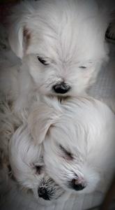 Trio of puppies
